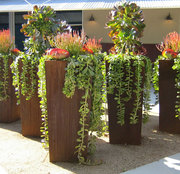 Rusty color corten steel planter for garden decoration